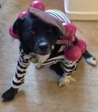 Pepper dressed as Onion Johnny, Halloween 2013